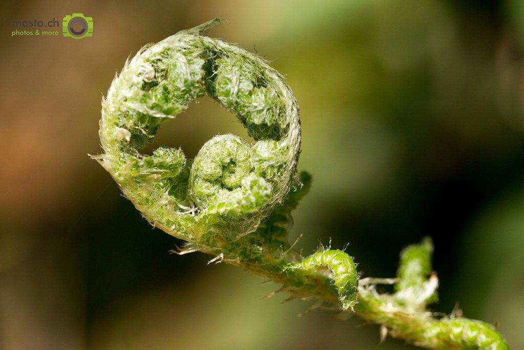 Rolling fern...