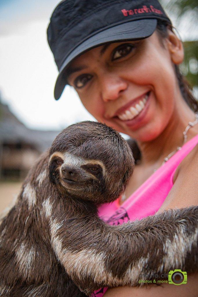 Three finger sloth