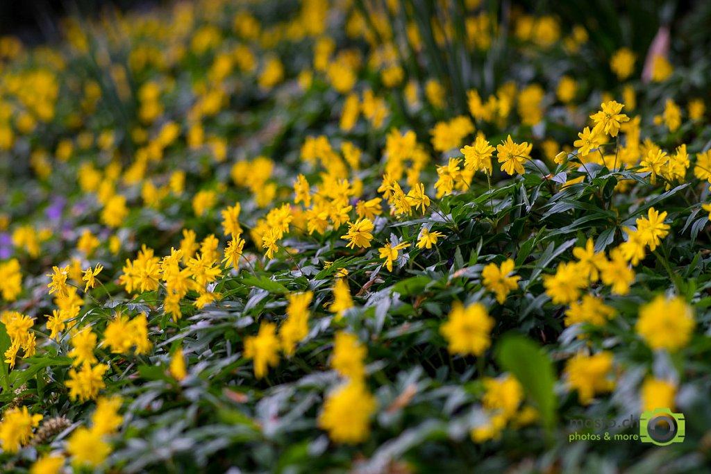 Spring explosion