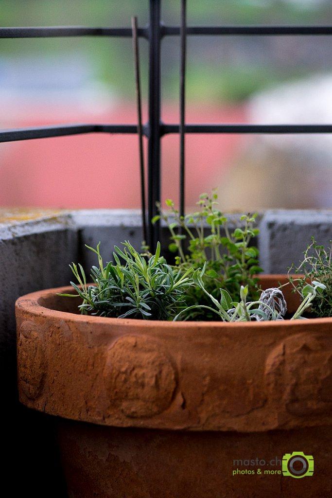 Herbs, growing herbs...